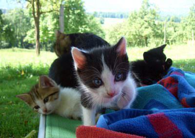 Die süßen Kätzchen begeistern jedes Kind