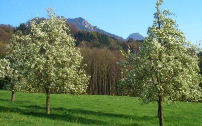 Frühling in Niederthann