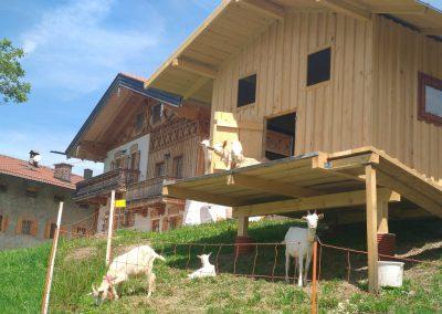 Ziegen vor Ferienhaus_komp